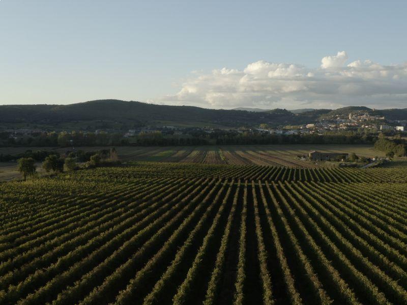 Vini umbri: alla scoperta del terroir e del vino umbro